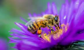 Bees are amazing!